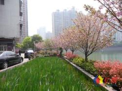 武汉一中附近 杨汊湖 浩海小区3楼 42万