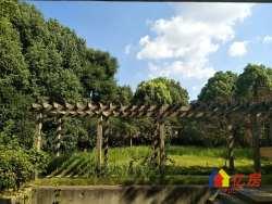 巢上城超 级大别墅 占地2500平 带1600平大花园 证满