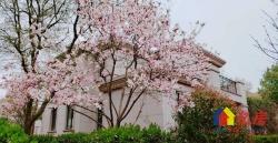 独栋别墅+一线双湖景+现房出售+送大花园庭院