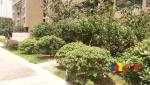 盛世江城 前排3栋,毛坯3房2卫 南北通透 带大兴路随时看房,武汉江汉区杨汊湖武汉市江汉区新湾路9号(地铁2号线长港路站附近)二手房3室 - 亿房网
