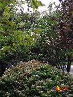 汉口沿江一线临江豪宅,怡景花园豪装3室,老证,拎包入住,武汉黄陂区河塔街4号二手房3室 - 亿房网