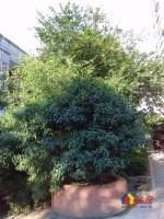 恋湖家园五期 带2个阳台 户型方正一线湖景,证满两年随时看房,武汉东西湖区金银湖东西湖区金山大道环湖路8号二手房2室 - 亿房网