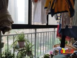 新长江香榭琴台墨园 老证精装 通透大户型 三梯两户保养很好