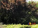 滨江苑一期  南北通透 户型方正 对口长春街小学 老证,武汉江岸区永清武汉市江岸区一元街二手房2室 - 亿房网