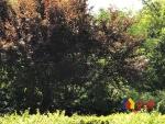 滨江苑花园洋房 低楼层诚心出售 有学籍老证,武汉江岸区永清武汉市江岸区一元街二手房3室 - 亿房网