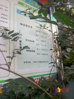 王家墩地铁旁 青年广场 电梯精装婚房 别致3房 便宜卖了,武汉江汉区武广万松园青年路64号二手房3室 - 亿房网