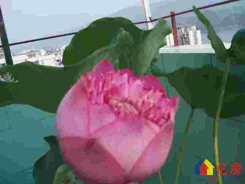 其他 其他 龙景花园 5室3厅3卫 183㎡,武汉其他其他广东省肇庆市端州区端州三路星湖绿道旁边二手房5室 - 亿房网