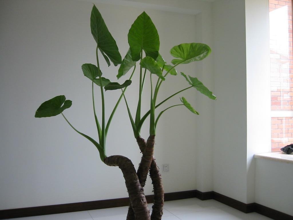 养家居观赏植物心得