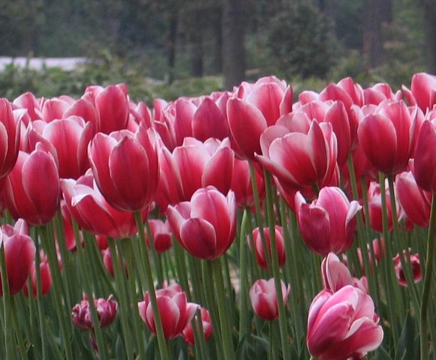 彩色的春天___花儿朵朵开