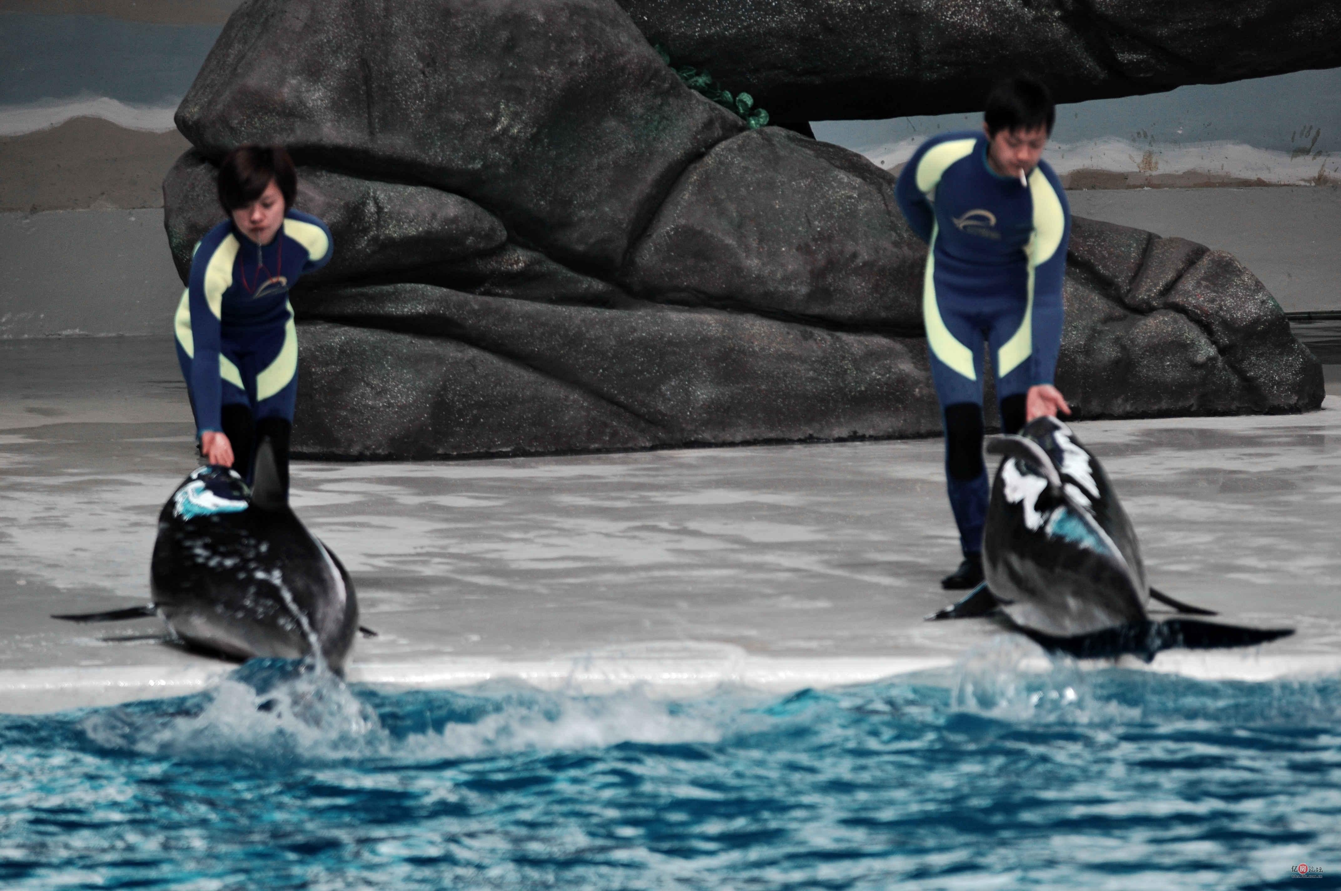【武汉玩什么】汉口北之海洋世界亲历记