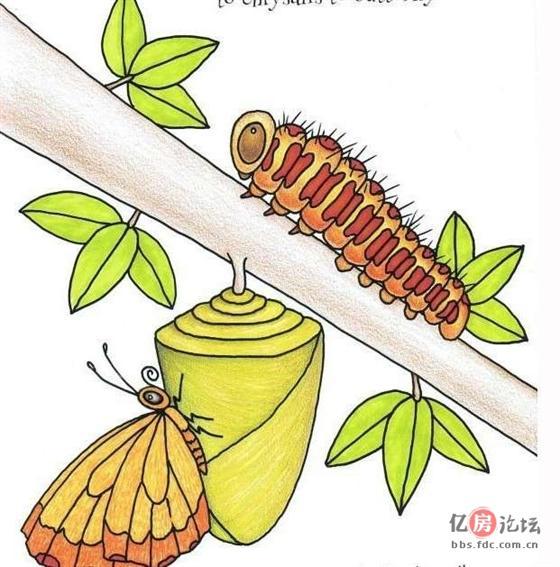 昆虫简笔画大全,一步一步教宝宝画昆虫!大家都来看看吧~其实很简单