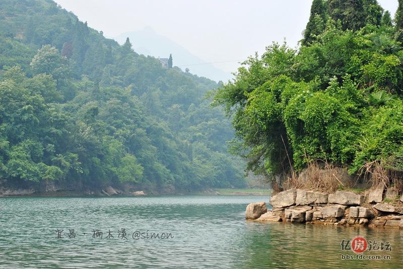 夷陵楠木林风景
