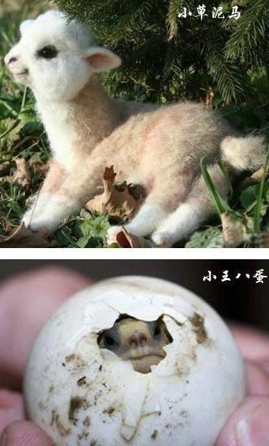 动物刚生出来的样子,小草尼玛超萌啊啊啊啊