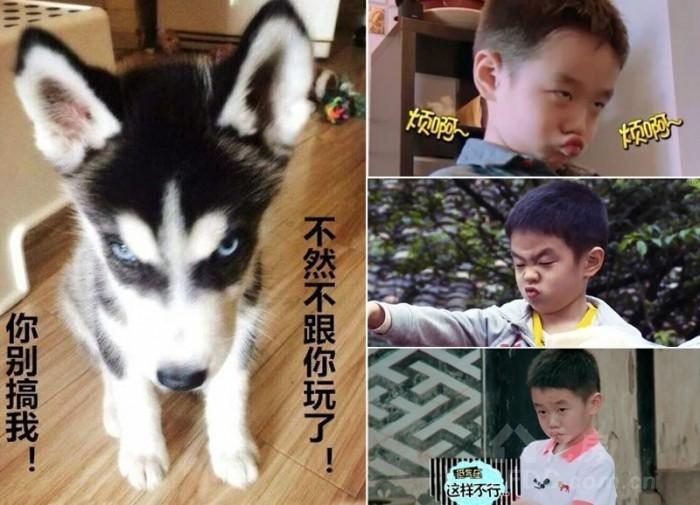 动物与明星撞脸照:李易峰似灰太狼