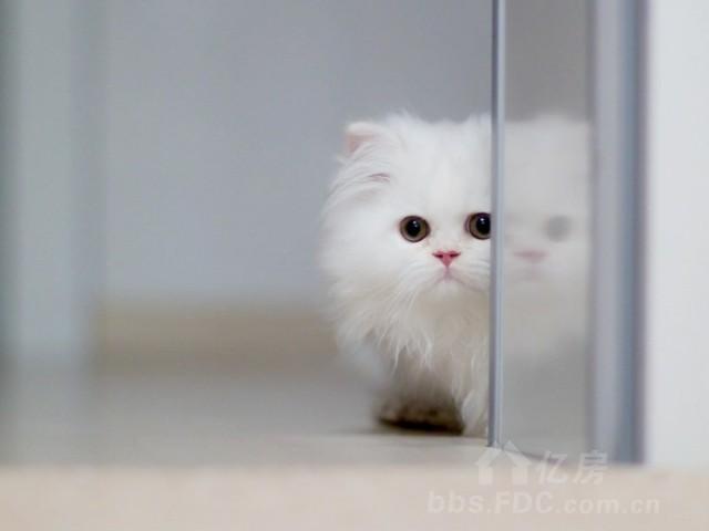萌宠猫咪表情包gif带字分享展示