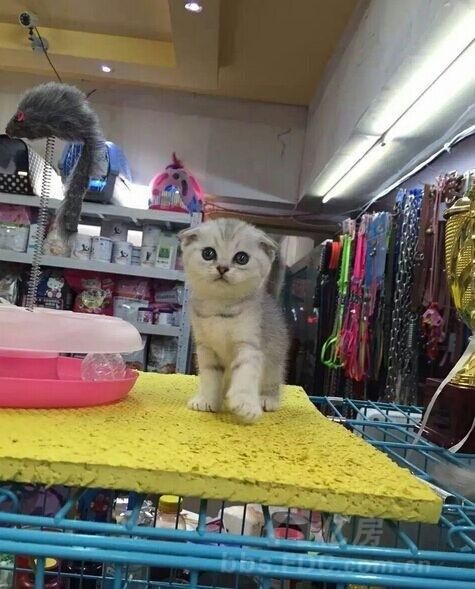 陪朋友逛宠物店,萌萌哒的喵咪实在太可爱了!