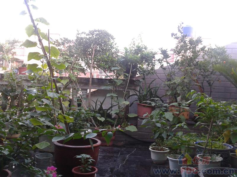 太阳岛花园
