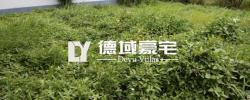多少楼台烟雨中?盘龙湾桂苑绝版双拼楼王421平380万带600平花园