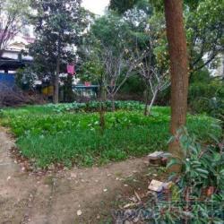 有轨电车口 碧波山庄 精装独栋别墅 带500平米超大花园