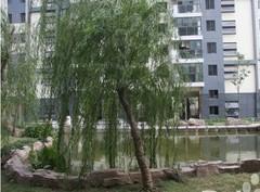 三金鑫城国际