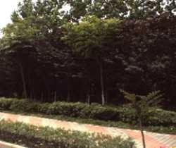 高尔夫城市花园
