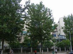常青花园24村