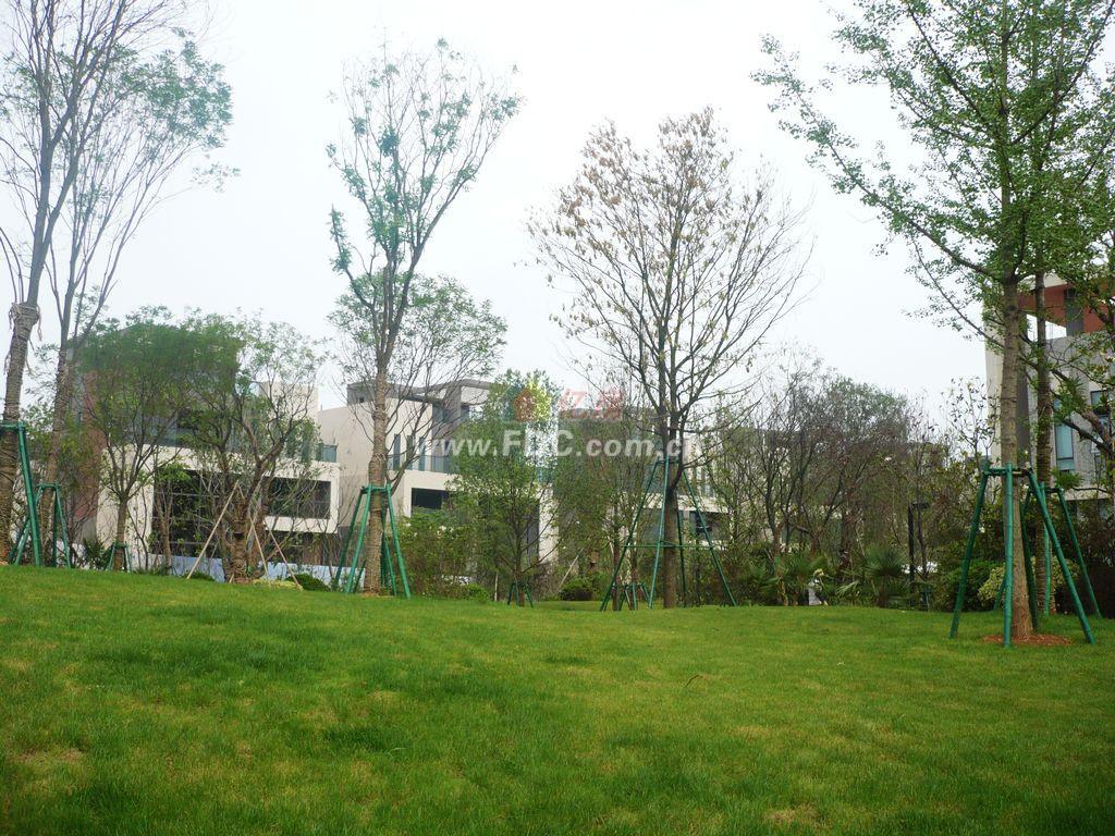 海伦堡千鹭湾小区图-项目2v小区实景城别墅草地曦图片