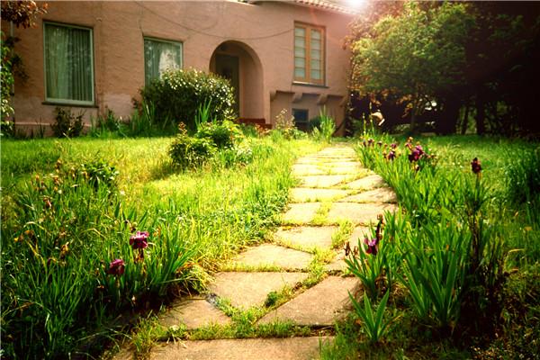 邮件上传分享 花园实景图
