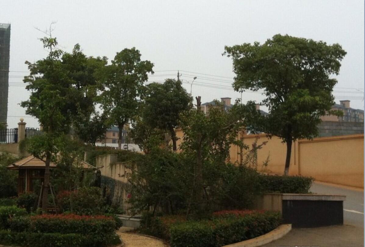 苏州科技城绿岛花园